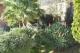 Andora - Rif 695 - Giardino
